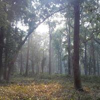 Dudhwa National Park 5/34 by Tripoto