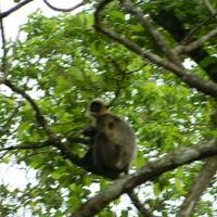Wayanad Wildlife Division 2/7 by Tripoto