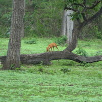 Wayanad Wildlife Division 4/7 by Tripoto