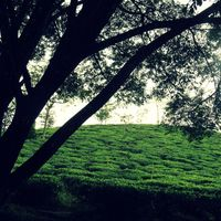 Lakkidi View Point 2/6 by Tripoto