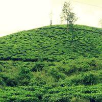 Lakkidi View Point 3/6 by Tripoto