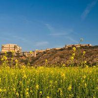 Neemrana's - Tijara Fort Palace 3/3 by Tripoto
