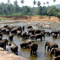 Pinnawala Elephant Orphanage 2/3 by Tripoto