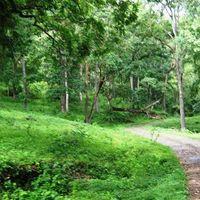 Anamalai Tiger Reserve 2/3 by Tripoto