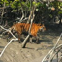Sundarbans National Park 2/9 by Tripoto