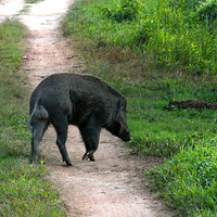Kaziranga National Park 3/118 by Tripoto