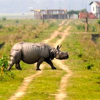 Kaziranga National Park 2/118 by Tripoto