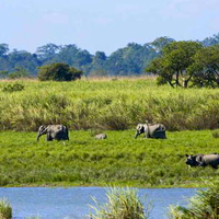 Kaziranga National Park 5/118 by Tripoto