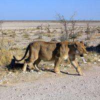 Etosha National Park 2/3 by Tripoto