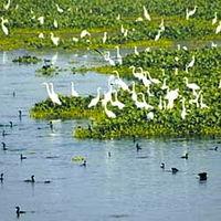 Harike Bird Sanctuary 2/2 by Tripoto