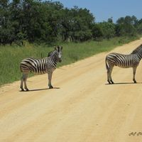 Kruger National Park 3/6 by Tripoto