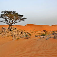 Wahiba Sands Desert 2/2 by Tripoto