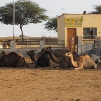 National Research Centre on Camel 4/4 by Tripoto