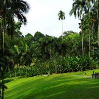 Singapore Botanic Gardens 4/7 by Tripoto
