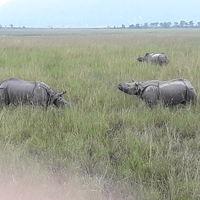 Pobitora Wildlife Sanctuary 4/12 by Tripoto