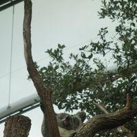 WILD LIFE Sydney Zoo 2/2 by Tripoto