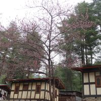 Taktsang Palphug Monastery 4/29 by Tripoto
