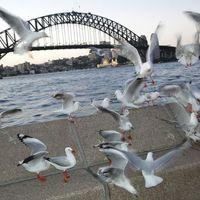 Sydney CBD 2/13 by Tripoto