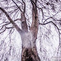 Hazratbal 3/5 by Tripoto