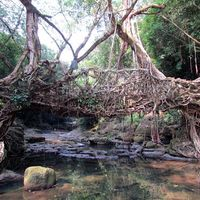 Jingmaham Living Root Bridge 4/33 by Tripoto