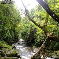 Jingmaham Living Root Bridge 5/33 by Tripoto