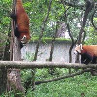 Padmaja Naidu Himalayan Zoological Park 3/18 by Tripoto