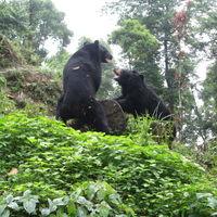 Padmaja Naidu Himalayan Zoological Park 4/18 by Tripoto