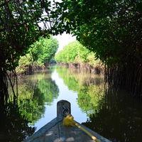 PICHAVARAM MANGROVE FOREST 5/7 by Tripoto