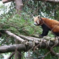 Padmaja Naidu Himalayan Zoological Park 5/18 by Tripoto