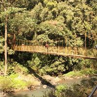 Abbey Falls Walking Trail 3/8 by Tripoto