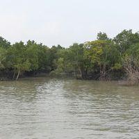 Sundarbans National Park 3/9 by Tripoto