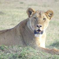 Lake Nakuru National Park 4/4 by Tripoto