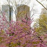 Central Park 2/57 by Tripoto