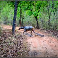 Bandhavgarh National Park 4/9 by Tripoto