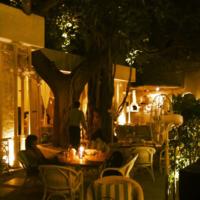 Olive Bar & Kitchen 2/2 by Tripoto