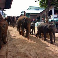 Pinnawala Elephant Orphanage 5/26 by Tripoto