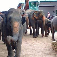 Pinnawala Elephant Orphanage 2/26 by Tripoto
