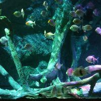SEA LIFE Bangkok Ocean World 3/10 by Tripoto