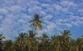 Arambol Beach 4/31 by Tripoto