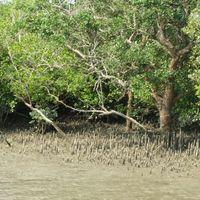 Sundarbans National Park 5/9 by Tripoto