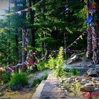 Tushita Meditation Centre 5/7 by Tripoto
