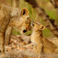 Gir National Park and Wildlife Sanctuary 3/23 by Tripoto