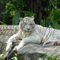 Singapore Zoo 3/29 by Tripoto