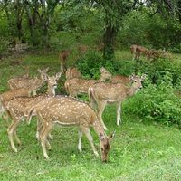 Gir National Park and Wildlife Sanctuary 2/23 by Tripoto