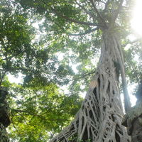 Ta Prohm 5/5 by Tripoto