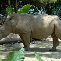Singapore Zoo 4/29 by Tripoto