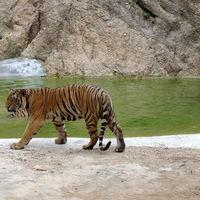 Tiger Temple Lum Sum Kanchanaburi Thailand 4/17 by Tripoto