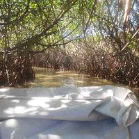 PICHAVARAM MANGROVE FOREST 4/7 by Tripoto