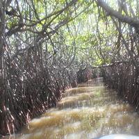 PICHAVARAM MANGROVE FOREST 2/7 by Tripoto