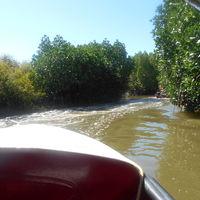 PICHAVARAM MANGROVE FOREST 3/7 by Tripoto